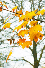 yellow and red leaves with drops of dew on tree branch in a fore