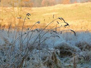Autumn frost covers shaded half of the land