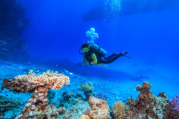 diver in the Red Sea