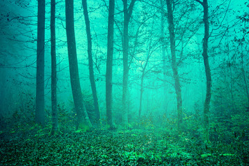 Dreamy green color forest