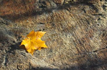 Feuilles en automne sur un arbre
