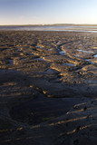 View of an low tide scenario landscape at dawn. poster