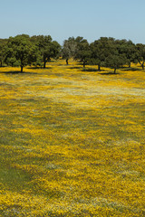 Beautiful spring landscape view of the Alentejo