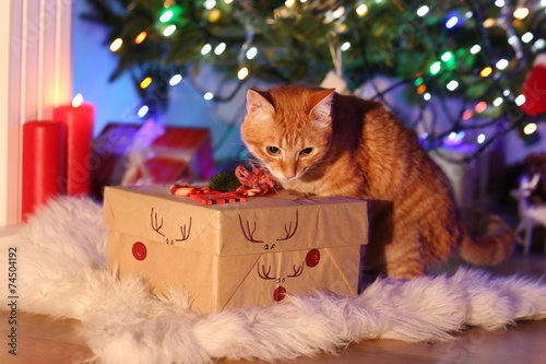 Foto op Canvas Kat Red cat with Christmas gift