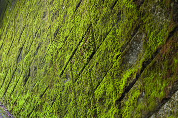 Green mossy wall with tiles