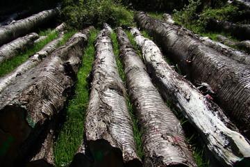 sTroncs d'arbres coupé,Aisne
