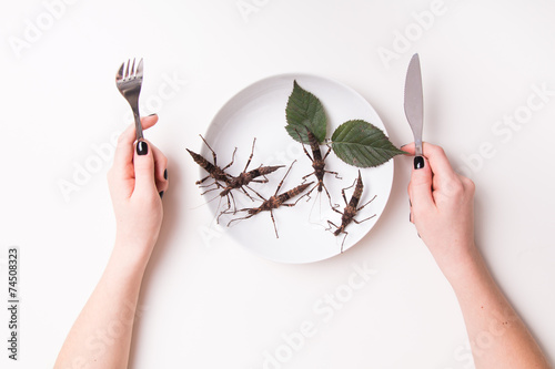 Plate full of insects in insect to eat restaurant - 74508323