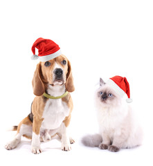 Cute dog and kitten with Christmas hats isolated on white
