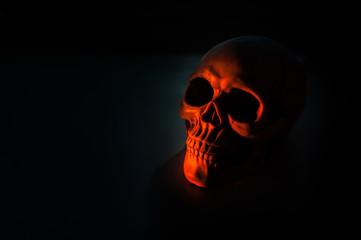 Still life with a skull human