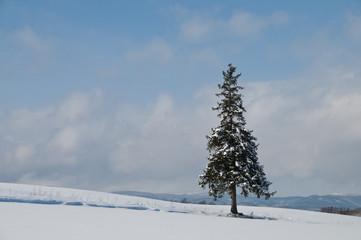 雪原に立つ一本の木