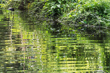 Greenery is reflected in water
