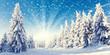 canvas print picture - Neuschnee im Winterwald
