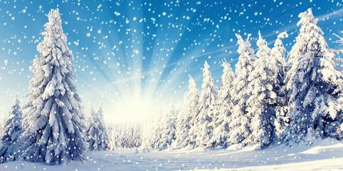 Neuschnee im Winterwald