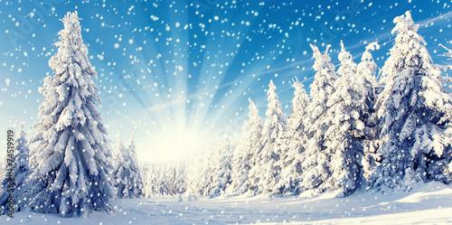 canvas print picture Neuschnee im Winterwald