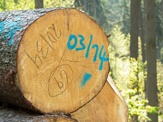 Markierung Holzstämme - Holzpolter - Langholz markiert