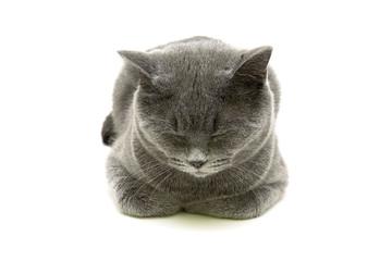 Sleeping gray cat isolated on white background
