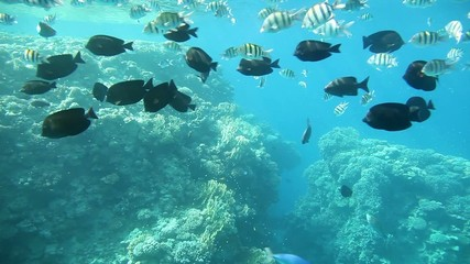 Underwater footage in the Red Sea. Egypt