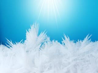 macro of frost