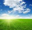 canvas print picture - field and sun