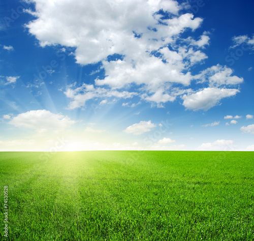 canvas print picture field and sun