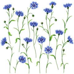 Blue cornflowers set