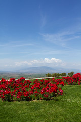 Landscape with red flowers