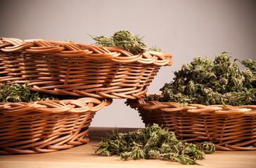 big canabis marijuana plant detail on wood table