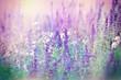 Purple flowers in meadow
