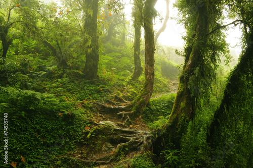 Staande foto Nepal Selva Nepal