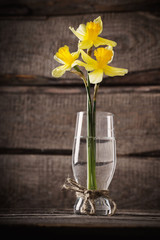 spring yellow  bouquet  on wooden background