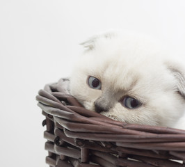 cute kitten in a wicker basket on a white background