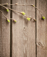 young leaves on a wooden background