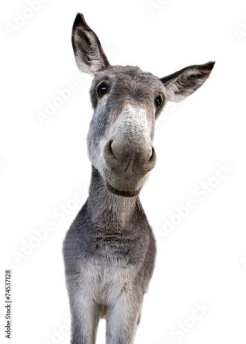 In de dag Ezel Donkey