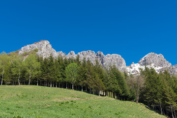 Italian limestone mountains of Alps above plants and lawns