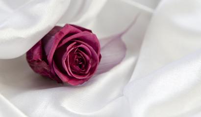 rose sur satin blanc