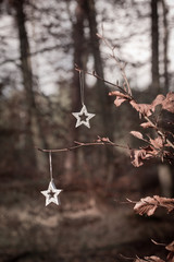 Weihnachtsterne im Wald
