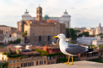 Seagull in the Roman Forum in Rome