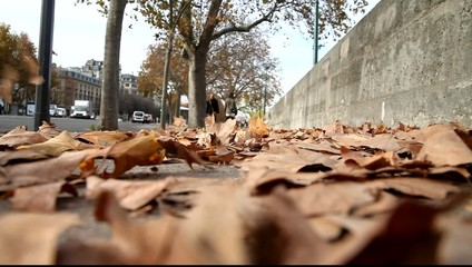 Wind blowing dry leaves on Seine embankment, Paris, France.
