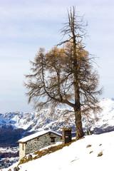 Casa e albero in montagna d'inverno
