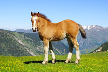 Picturesque nature landscape with foal.