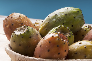 Sicily succulent prickly pear