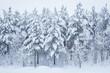 Leinwanddruck Bild - Forest trees covered in snow