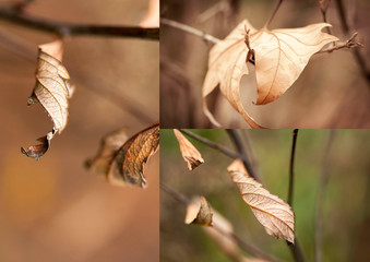 Collage di foglie