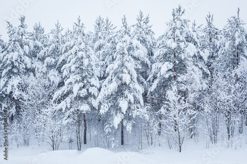 Leinwanddruck Bild Forest trees covered in snow