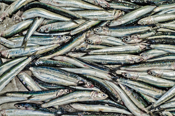 sardines in a desk of a fish market in Tokyo