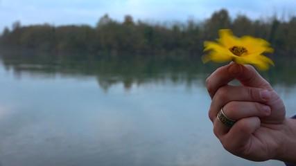 Beautiful yellow flower runs in the hand