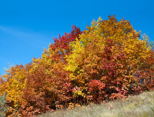 Colored autumn bushes at blue sky