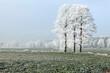 Zimowy szron na drzewach.