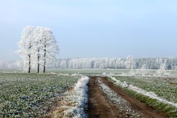 Szron zimą na polach.
