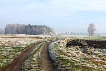 Zimowy szron na polach.